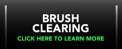 BRush and Tree Clearing in Fort Myers