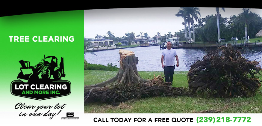 Tree Clearing in and near Cape Coral Florida